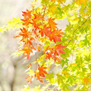 ≪女性限定≫秋のイベント