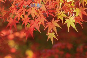 秋の女性限定プラン